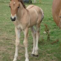 Fleetmead foal