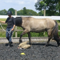 Nashend Wheatier having a go at pony agility