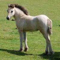 Erray Stud 2011 foal