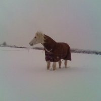 Rignell Ruari 20 years young all snug in the snow